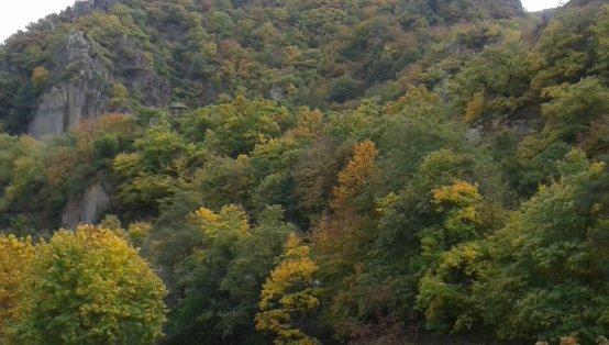 The Golden Autumn